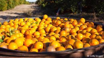البرتقال : يحتوي على كميات كبيرة من فيتامين C والتي تزيد من مقاومة الجسم للأمراض والفيروسات. يساعد البرتقال أيضا على تنشيط الدورة الدموية ويزيد من قابلية الجسم في امتصاص الحديد المهم في زيادة النشاط والحيوية للجسم