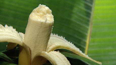 الموز: الموز ينمي الفكر والذكاء وينشط الذهن ويبني العضلات ويحتوي على عدد من الفيتامينات المهمة، كفيتامين A, B2, B12 وفيتامين B6 المهم في تكوين مادة السيروتونين المنظمة لمزاج الإنسان
