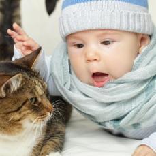 """القطط والكلاب، الحيوانات المفضلة للإنسان تتسبب في انتقال بكتيريا """"الكانبيلوباكتر"""" المسؤولة عن الإسهال والتقيؤ. القطط على وجه الخصوص تنقل بكتيريا السلمونيللا إلى الإنسان ما يتسبب الحمى والالتهابات"""