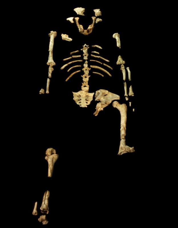 بقايا الهيكل العظمي للوسي التي كانت تعد جد الإنسان الأول