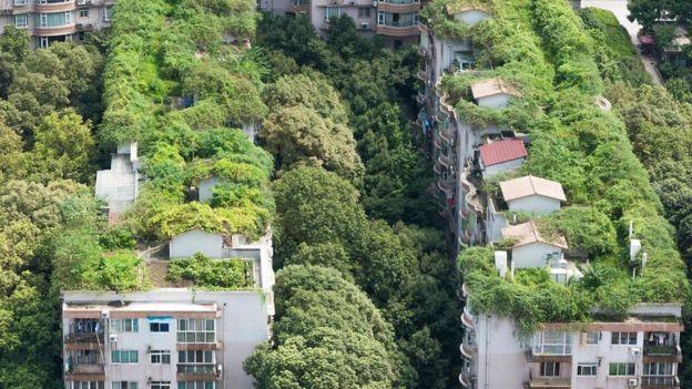 تساعد الخضرة الكثيفة على تخفيض درجات الحرارة في المدن، مثل مدينة تشنغدو الصينية، في فصل الصيف