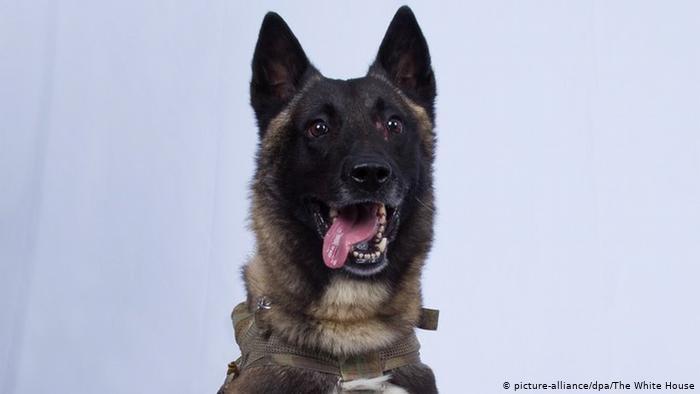 كلب أمريكي ساعد في القضاء علي زعيم تنظيم القاعدة