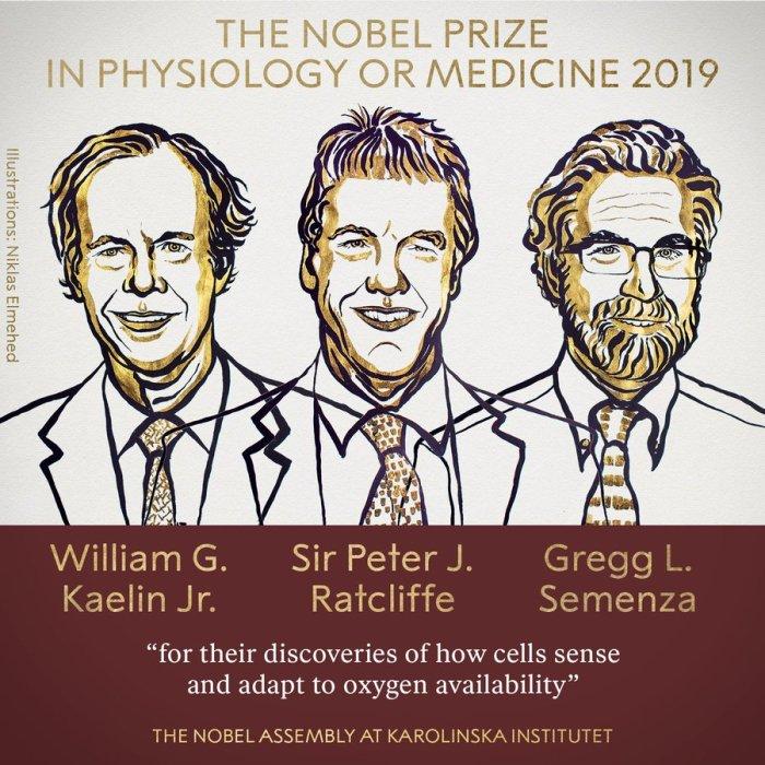 الفائزون بجائزة نوبل في الطب عن عام 2019 الأمريكيين وليام كايلين وجريج سيمينزا والبريطاني بيتر راتكليف