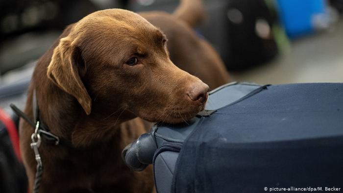 الكلاب تمكنت بعد تدريب استمر أسبوعا من الكشف بصورة سليمة تماما عبر تشمم اللعاب والنفس عن 94 % من المصابين في تجارب شملت 1012 شخصا.