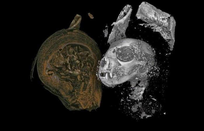 رأس قطة محنطة تم الكشف عنها بواسطة التصوير الثلاثي الأبعاد بالأشعة السينية