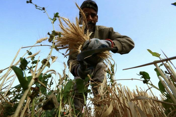 تعزز المملكة العربية السعودية إنتاجها الزراعي المحلي