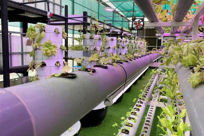 مزرعة رأسية ذات تقنية عالية حيث يمكن للمزارعين المحليين زراعة محاصيلهم على الرغم من الإغلاق الوطني بسبب الوباء، في الشارقة، الإمارات العربية المتحدة، في أبريل 2020