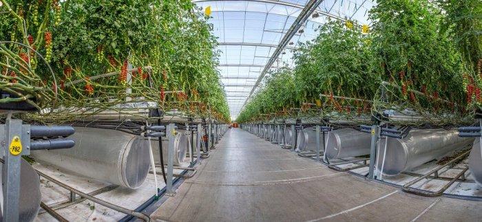 هل تصبح المزارع التكنولوجية التي تعتمد علي الذكاء الإصطناعي طوق النجاة للأمن الغذائي الخليجي