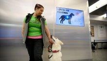 تدرب أحد الكلاب على الكشف عن فيروس كورونا مع مدربه في مطار هلسنكي.