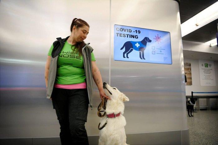 أحد الكلاب التي تم تدريبها على الكشف عن فيروس كورونا مع مدربته في مطار هلسنكي