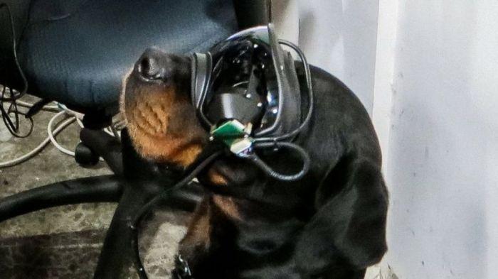 نظارة الواقع المعزز مزودة بـ كاميرا وشاشة إلكترونية
