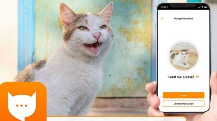 مياو توك: تطبيق من أليكسا أمازون يترجم 13 عبارة من مواء قطتك