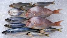 الأسماك لها فوائد صحية كثيرة، فهل لها مضار أيضا