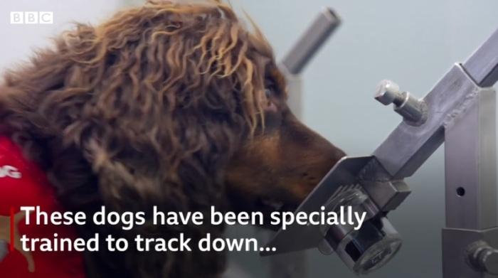 يتم تدريب الكلاب علي إكتشاف رائحة المصابين بمرض معين مثل السرطان وكورونا وغيرها