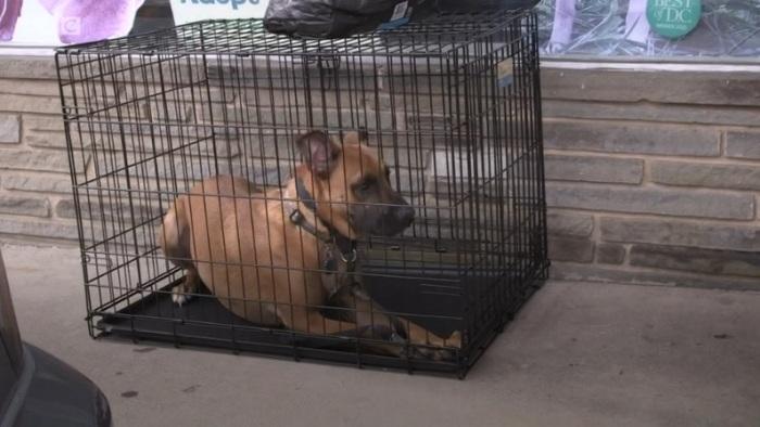 بعض الكلاب التي تستوردها الولايات المتحدة تأتي بشهادات صحية مزورة